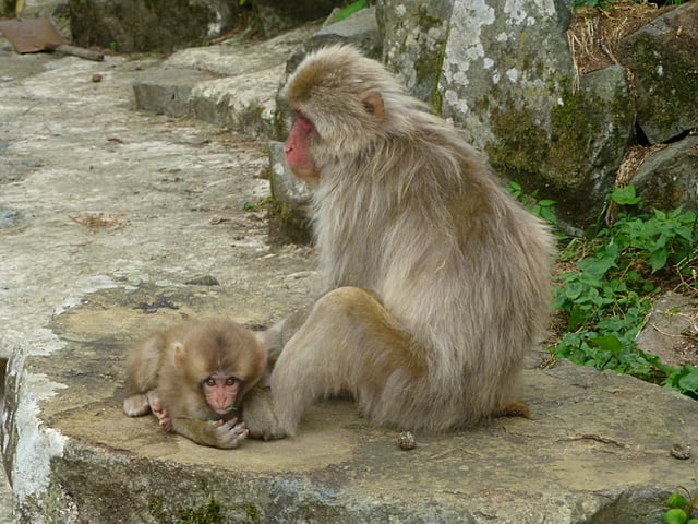 Cute young monkeys